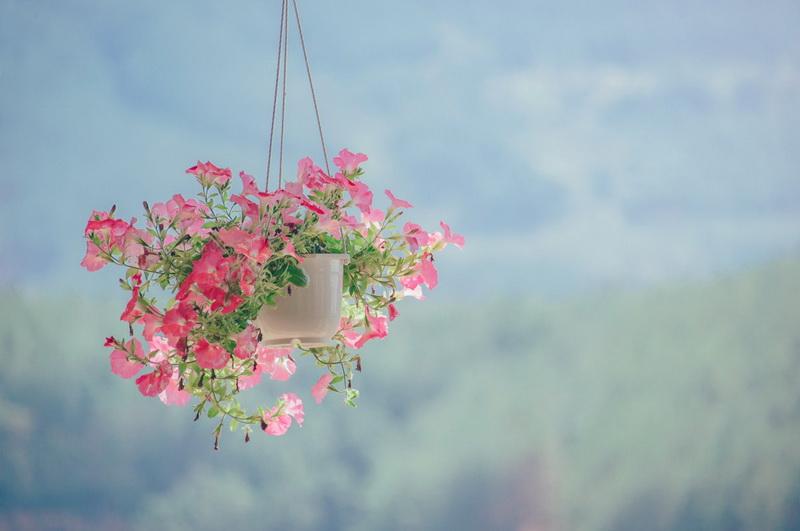 Цветы в кашпо-фото