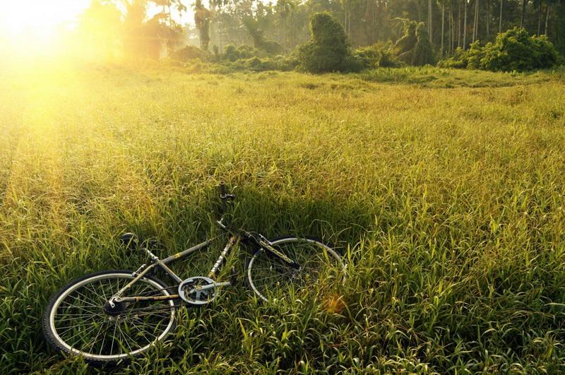 bicycle bike-field