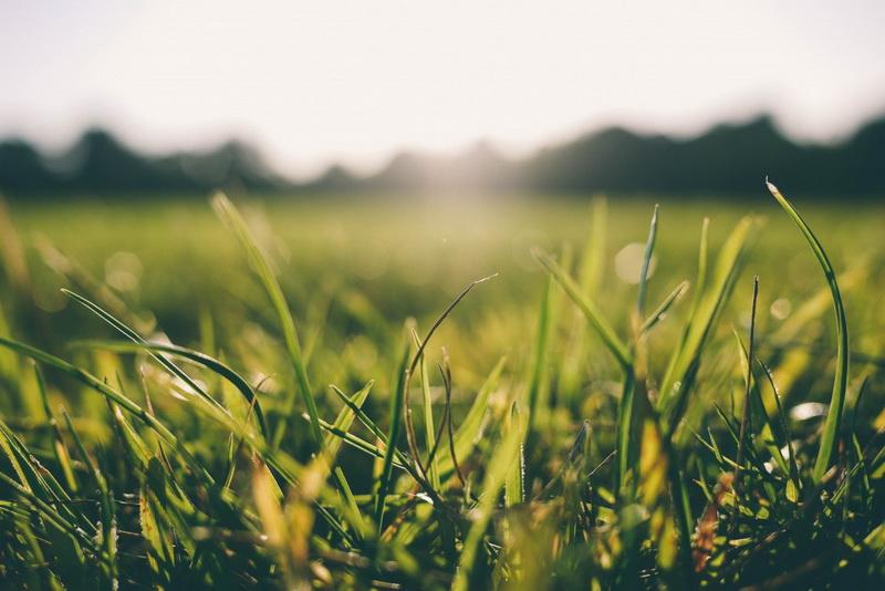 grass morning-новый день