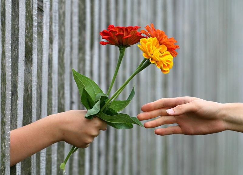 Цветы-повод для счастья