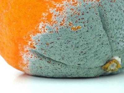 Сіра цвіль на апельсин