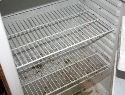 Плесень в холодильнике