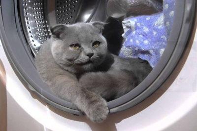 Кіт в пралці