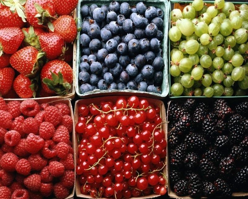 Запасаемся фруктами, ягодами и зеленью до холодов холодильники с объёмными морозилками - фрукты в лотках перед заморозкой