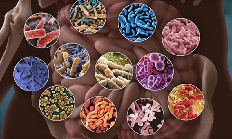 Что нужно знать о микрофлоре и витаминах