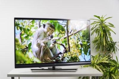 Вазон возле телевизора
