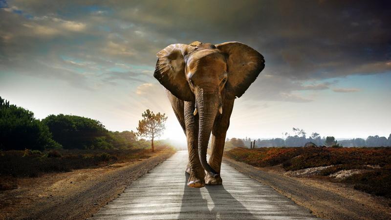 Медитация на слоне-эксклюзивные услуги