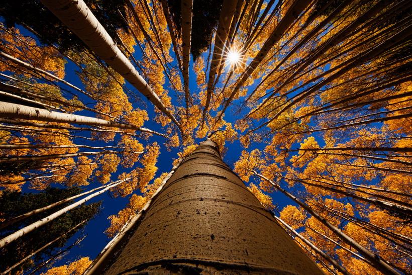 Золотая осень-креативный кадр