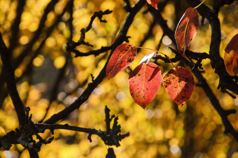 autumn leaf-красота осени