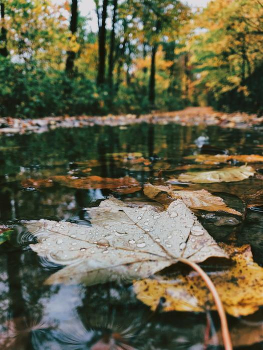 Дождливая осень-ноябрь