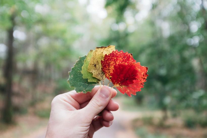 Краски осени-листва