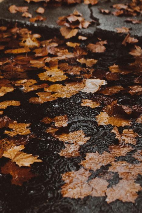 Осень и дождь-ноябрь