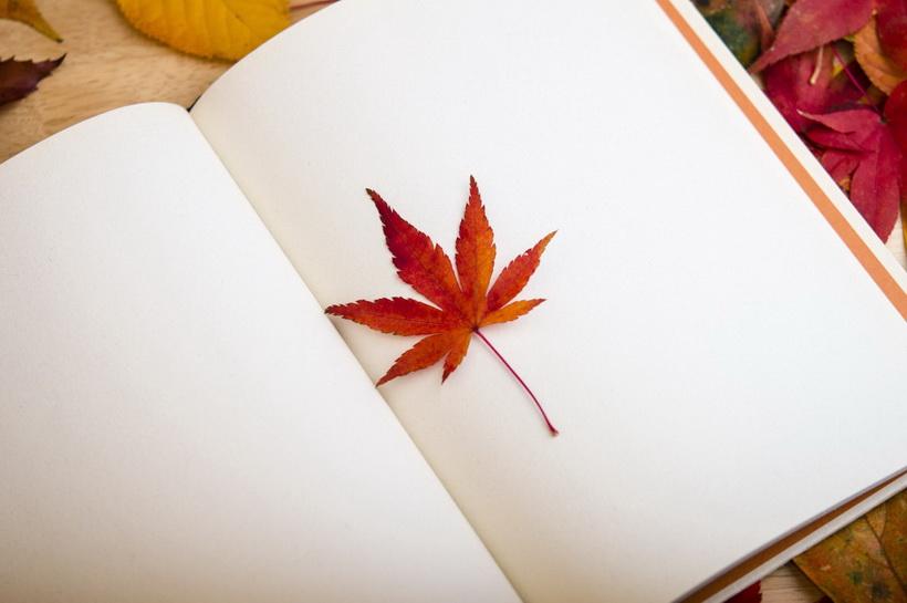 Осень-жизнь с чистого листа