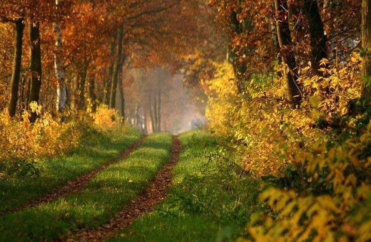 Shinrin-yoku-золотая осень