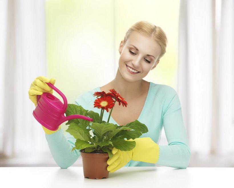 Уход за комнатными растениями-как отвлечься