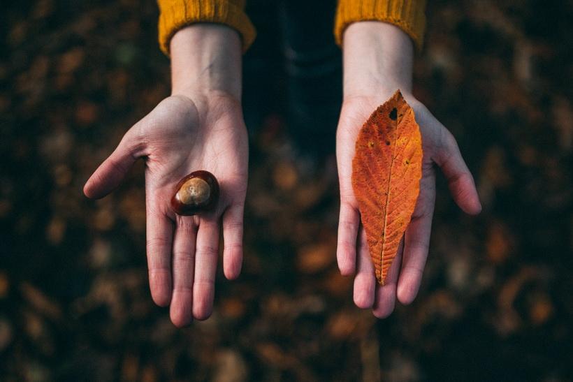Золотая осень-находки