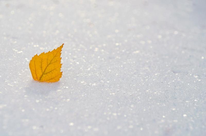 Встреча осени и зимы-декабрь