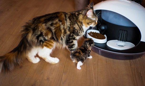 CES-2019-умная кормушка для кошек