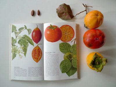 Опис виду в книзі та ягоди різних сортів на столі