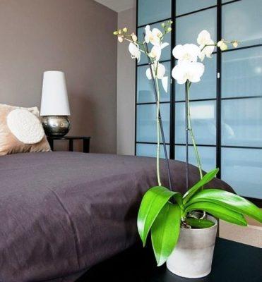 Уход за орхидеей в домашних условиях летом