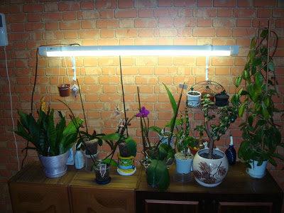Уход за орхідеєю восени