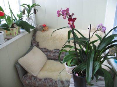 Как ухаживать за орхидеей летом