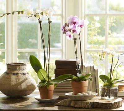 Уход после пересадки орхидеи не потребуется