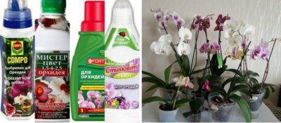 Уход за орхидеей в период цветения