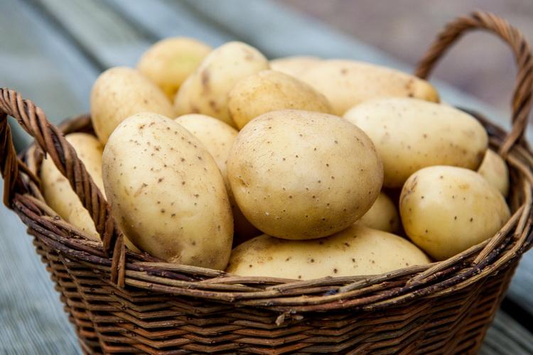 Картофель-популярный продукт