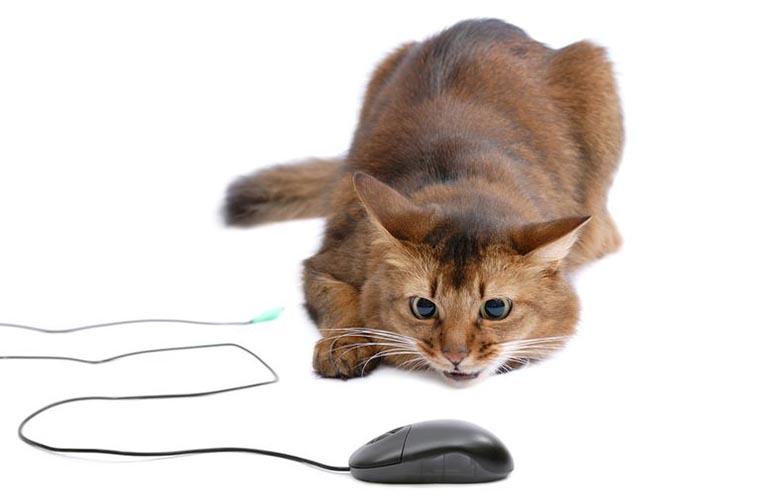Кот ест провода