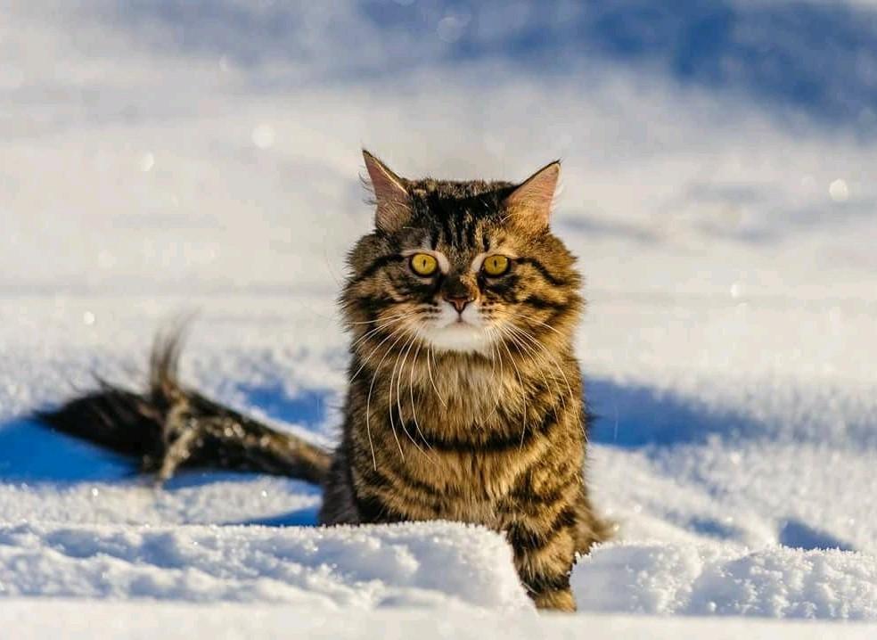 Кот-мороз