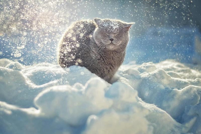 Кот-снег