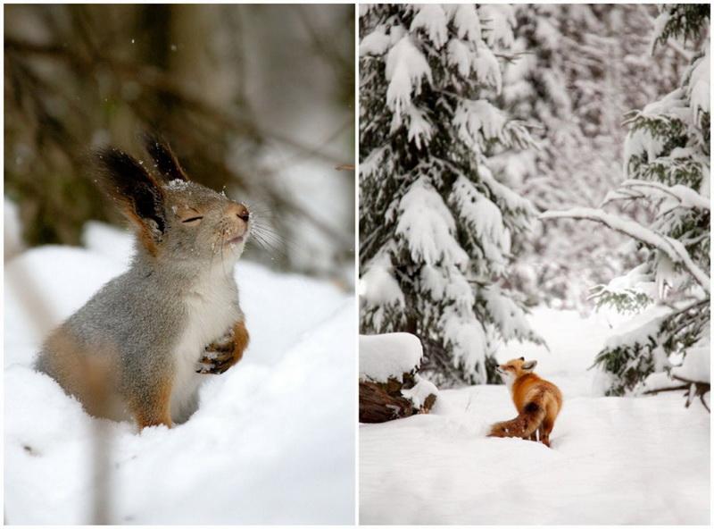 Зима-снежный денек