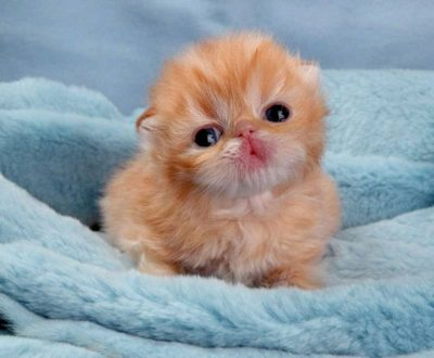 Чем кормить маленького котенка
