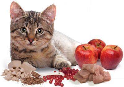 Чим годувати кошенят
