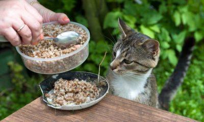 Харчування кошеня
