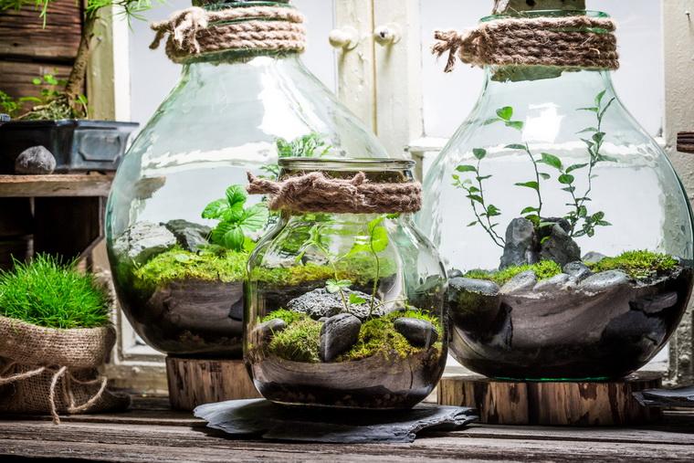 Комнатное цветоводство-закрытый флорариум