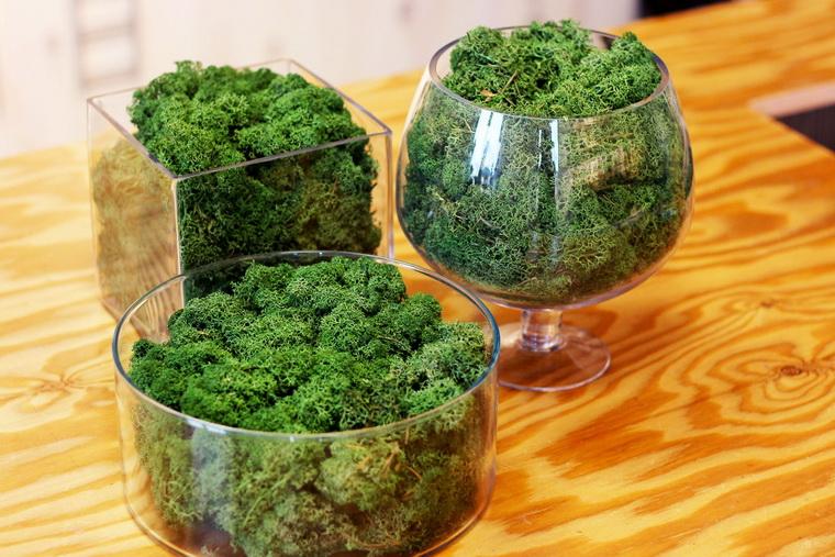 Наполнение флорариума-мох