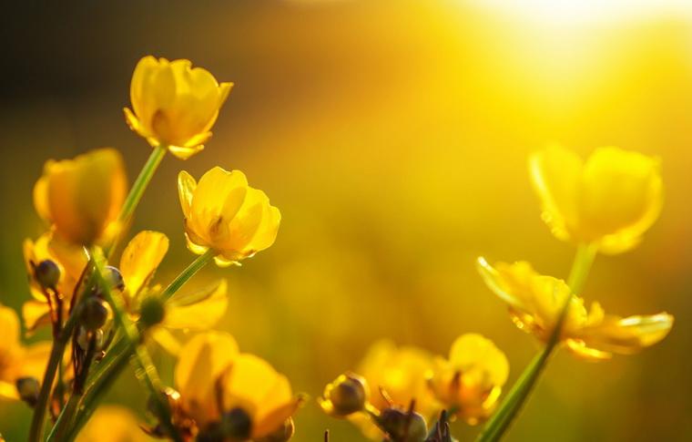 Солнце-март