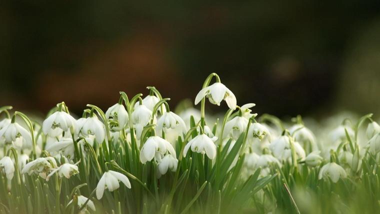 Весенние цветы-природа оживает