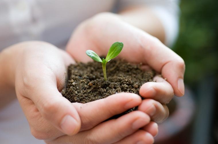 Весна в руках-рождение новых идей