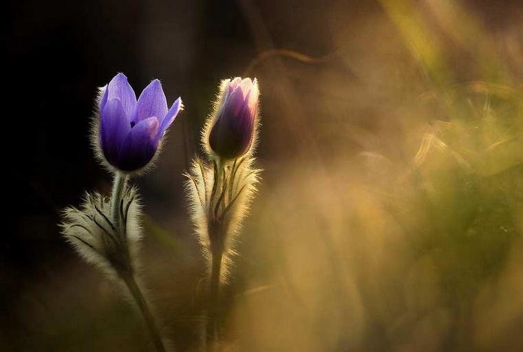 Весна-время перемен