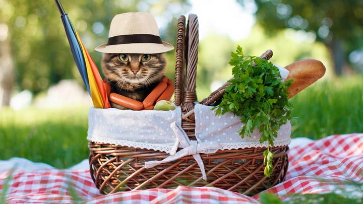 Идеальный пикник-что нужно взять