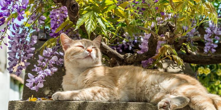 Кот-весна