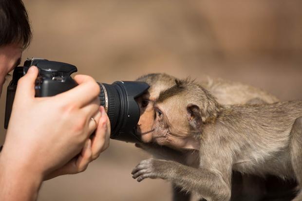 Любопытство-фото