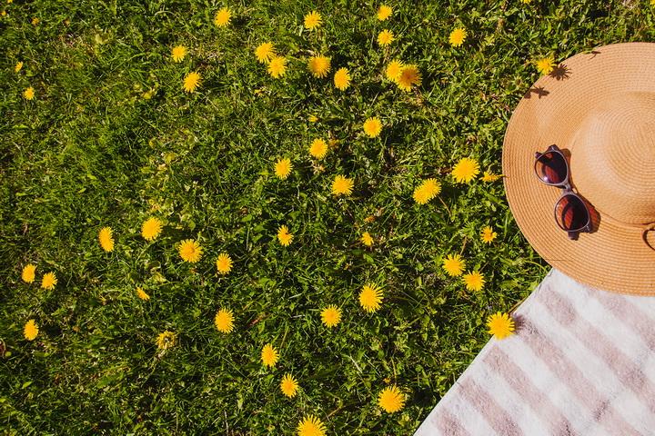 Пикник-на траве