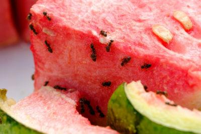 Как бороться с муравьями: Профилактика вторжения