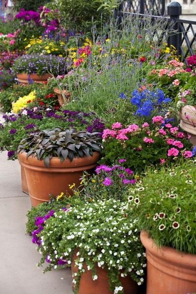 Контейнерное озеленение-в саду фото