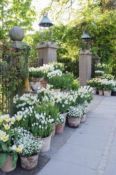 Контейнерное озеленение-в саду