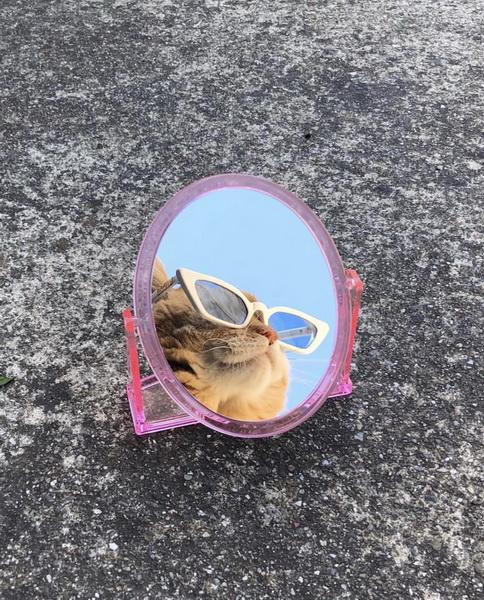 Кот-в очках
